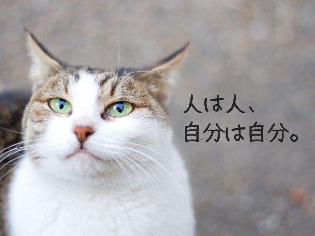 人と違って良いと思う猫